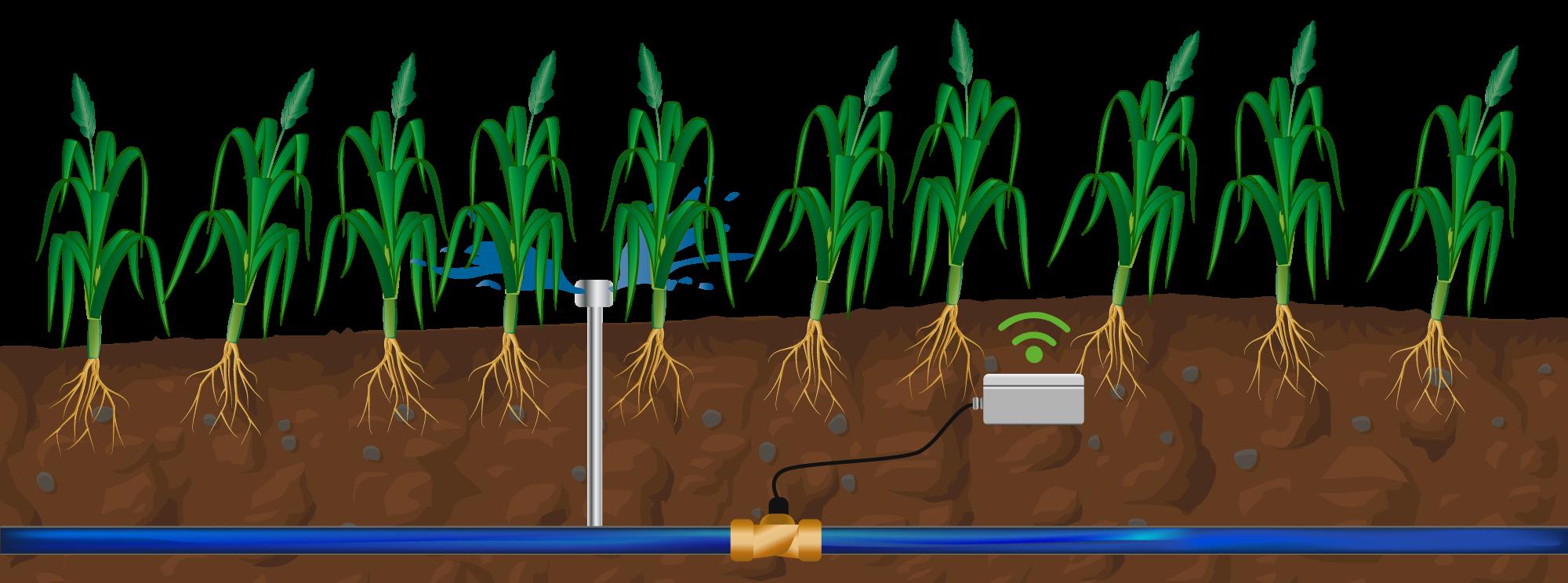 Darstellung des Smart Emitters im Maisfeld
